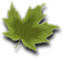 country leaf